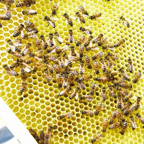 """Unter dem Motto """"Wir geben der Natur ein Stück zurück"""" legt B+S Wert auf Nachhaltigkeit und produziert eigenen Honig"""